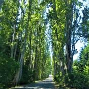 A Popular Historic Road