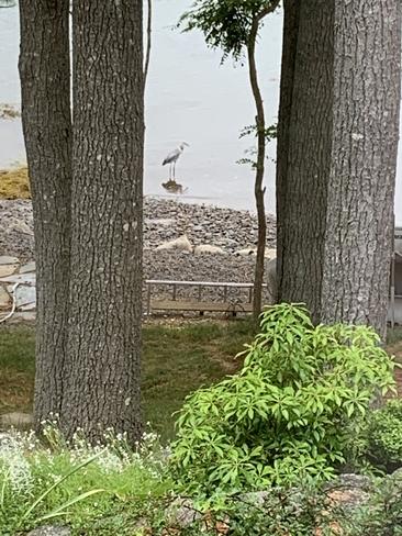 Bird Mahone Bay, Nova Scotia, CA