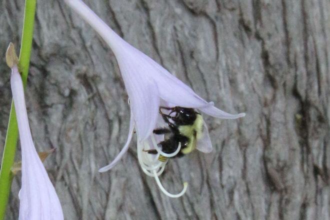 Lovely Bees Blind River, ON