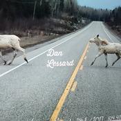 Spirit (White) Moose