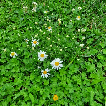 small flowers, don't mow