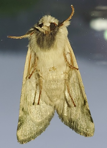 Mothra Hartley Bay, BC