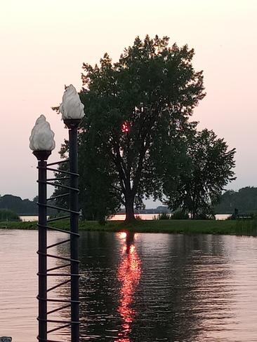 Arbre en feu dans l'eau Salaberry-de-Valleyfield, QC J6S 6J8