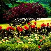 Flowers In Total Bloom