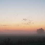 Foggy sunrise in Pt. Franks