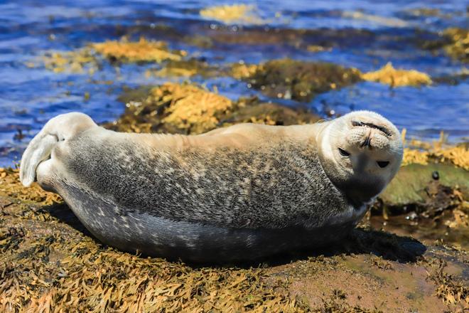 Sunbathing Seal River John, NS