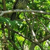 Quel est cet oiseau?