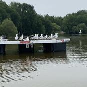 Seagulls on duty