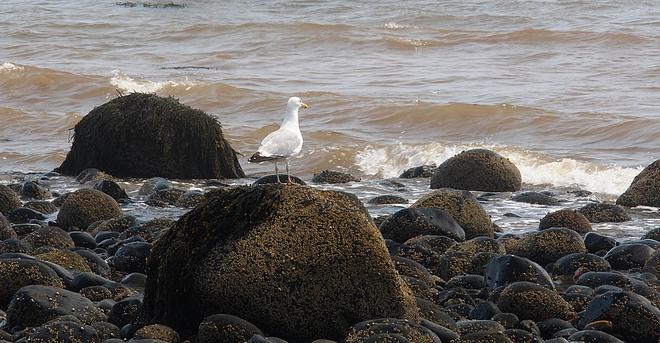 SAINTS REST BEACH Saint John, NB