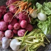 Les bons légumes du jardin