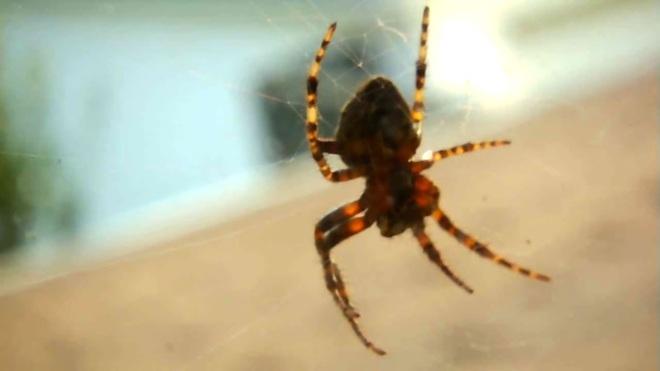 chez l'araignée Chambord, QC