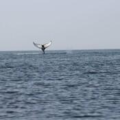 Spectacle en mer