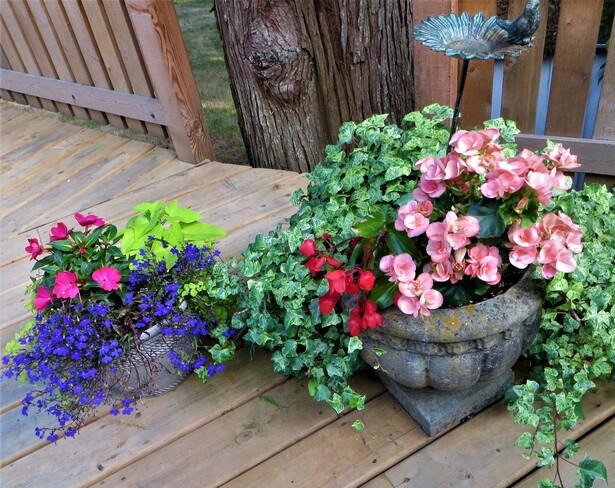 Happy Bloomes Sooke, BC