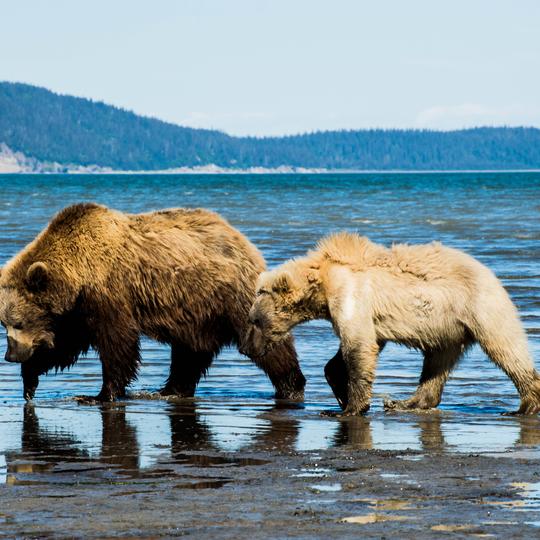 Lake Clark National Park and Preserve