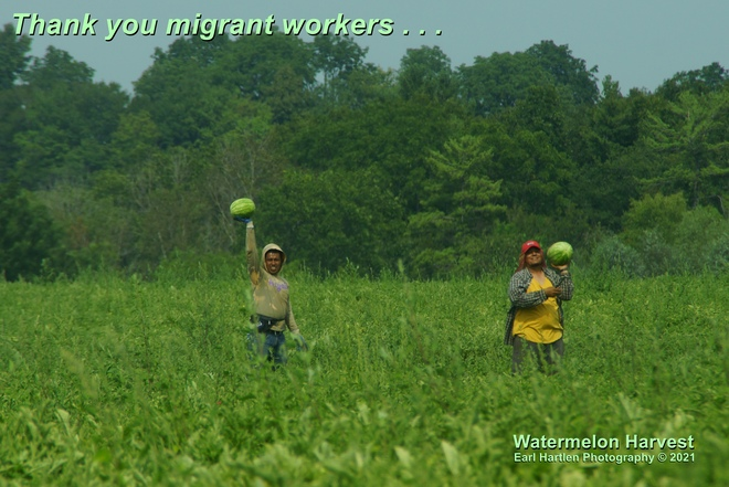 Off Shore Migrant Workers Port Dover, ON
