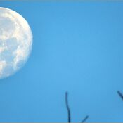August's full Moon was traditionally called the Sturgeon Moon .