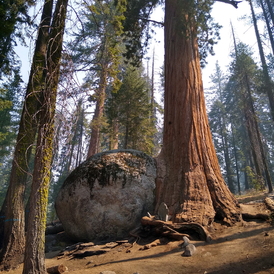 Sequoia and Kings Canyon National Park