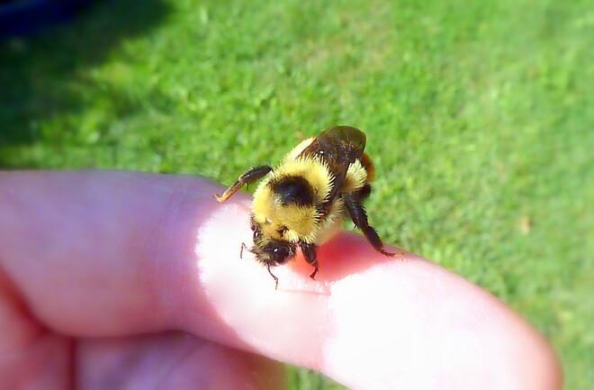 Little Bumblebee Bee-uty Toronto, ON