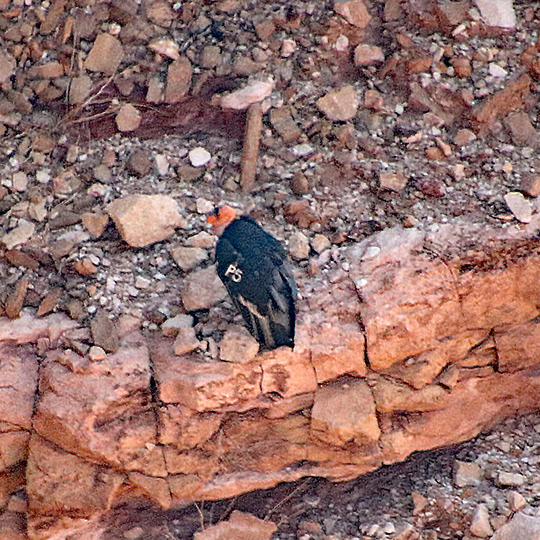 Navajo Bridge - Glen Canyon National Recreation Area