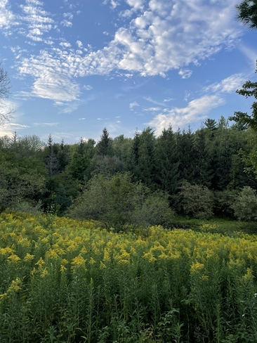 Parc des salins ( saint hyacinthe) Saint-Hyacinthe, Québec, CA