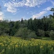Parc des salins ( saint hyacinthe)