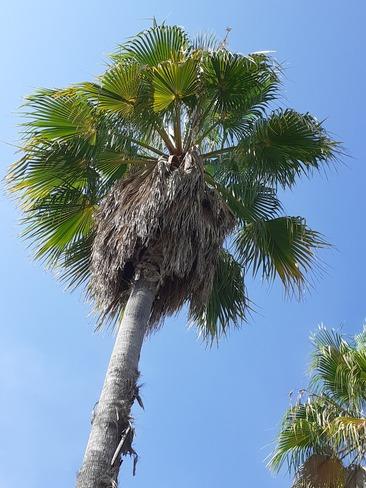tête dans le bleue Méditerranée Cannes, PAC