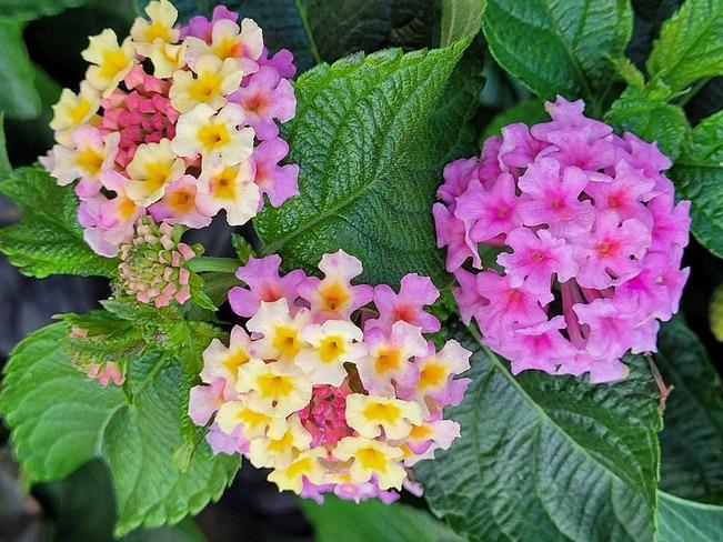Amazing flowers Victoria, B.C.
