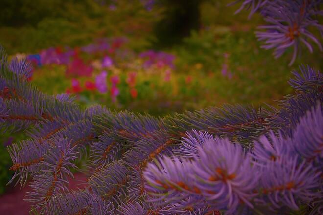 Summertime In The Garden Winnipeg, MB