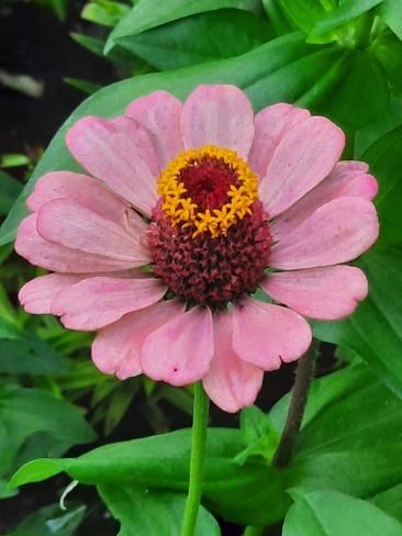 Beautiful flower Kingston, ON