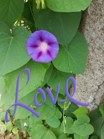 Purple 💜💚💜💚 Hamilton, ON