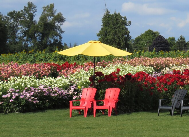 The last few days to see beautiful flowers Vancouver, BC