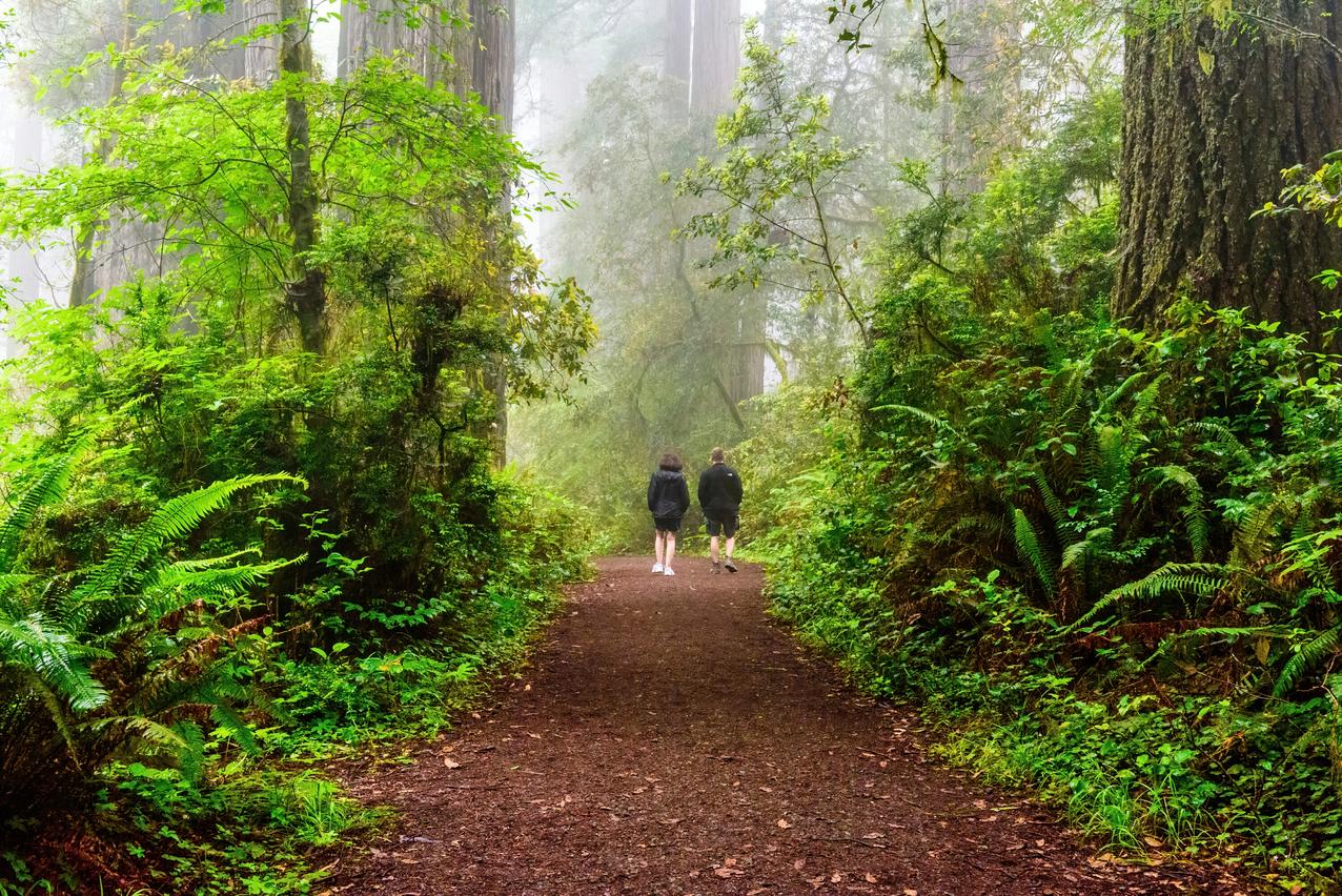 Redwood Forest National Park