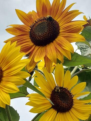Save the Bees Tillsonburg, ON