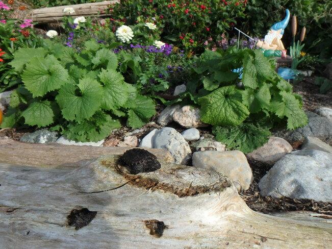 Little turtle Roseneath, ON