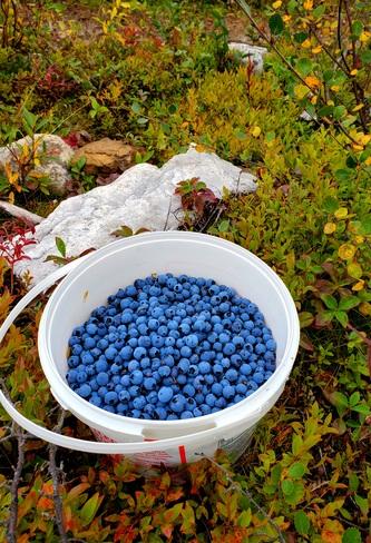 On a hillside in September. Labrador City, NL