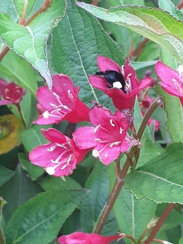 Bee Bum Summerside, PE