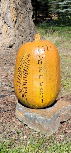 pumpkin harvest Baynes Lake, BC