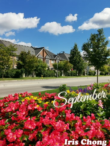 Sept 16 2021 21C Beautiful Sept late Summer morning in Thornhill Thornhill, ON