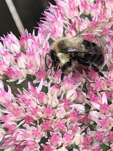 Busy Bee Richmond Hill, Ontario | L4C 5A5