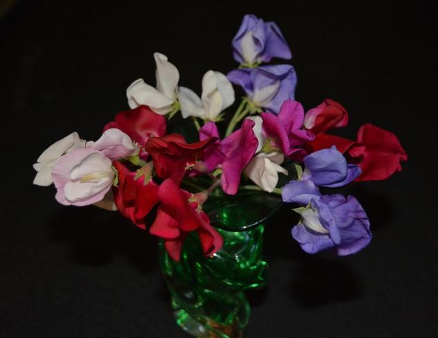 Sweet Peas in a Vase Calgary