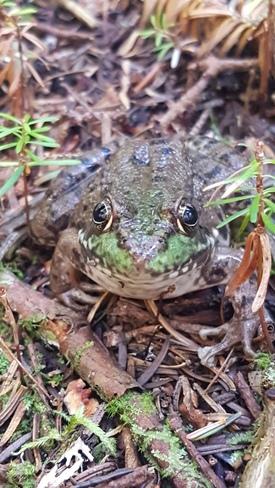 A forest friend St. Martins, NB