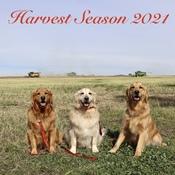 Harvest Season 2021