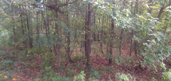 Forest of Dubňany Dubnany, 64