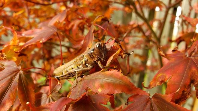 grasshopper Maidstone, ON