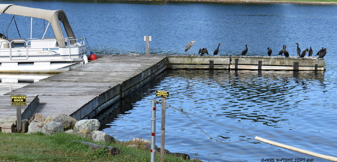 IGNORING PRIVATE DOCK/PROPERTY SIGNS Baddeck, NS