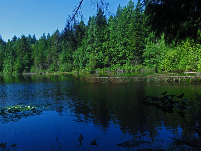 Munday Lake, Coquitlam Coquitlam, BC