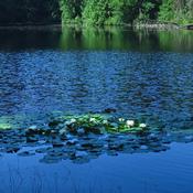 Munday Lake, Coquitlam