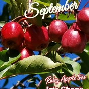 Sept 18 2021 22C Happy Saturday!:) Ruby Apple tree in Thornhill