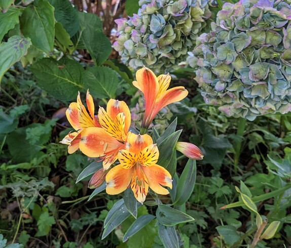 flowers after storm Vancouver, BC