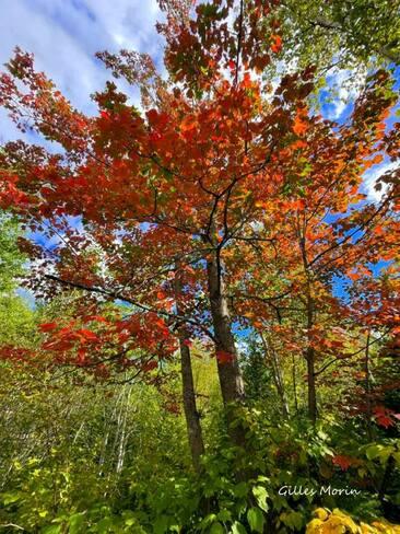 Couleur d'automne Saguenay, QC